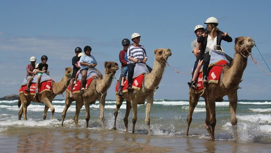 ‪Coffs Coast Camels‬