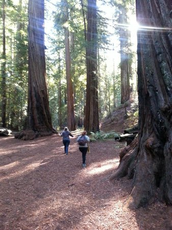 Orr Hot Springs Resort : Montgomery Woods State Park