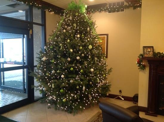 Holiday Inn Oneonta: beautiful christmas tree in the lobby