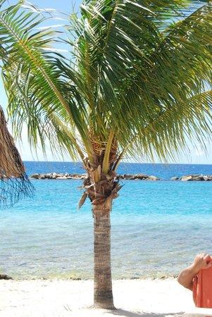 Sunscape Curaçao Resort Spa & Casino: paradise