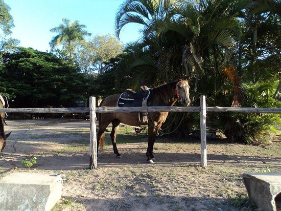 Horseshoe Bay Ranch: Beautiful horses in very good condition.