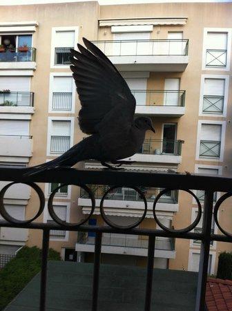 Adagio Access Nice Acropolis: Varanda  e meus pombos visitantes