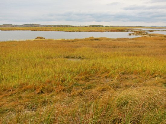 Parker River National Wildlife Refuge : The Salt marsh