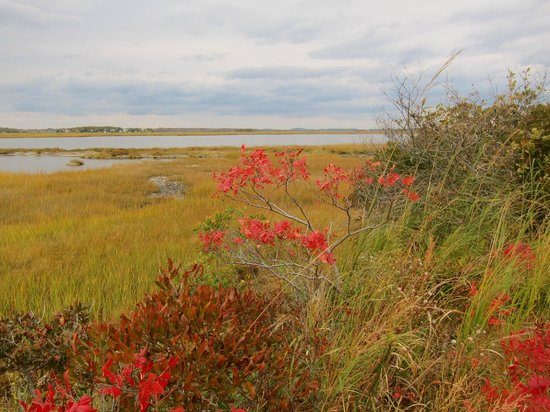 Parker River National Wildlife Refuge: The salt marsh