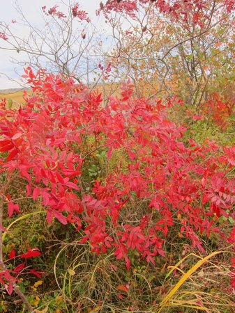 Parker River National Wildlife Refuge: Fall folliage along the marsh