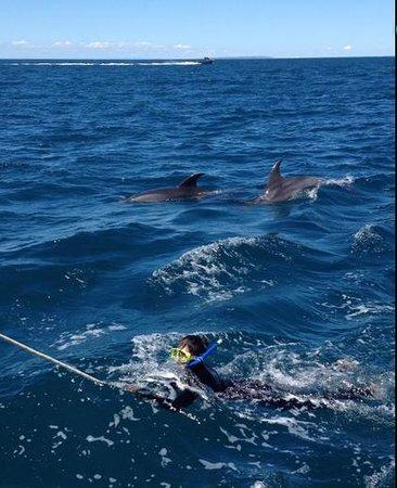 Sea All Dolphin Swims: Dolphin swim