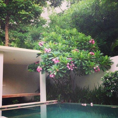 Kebun Villas & Resort: Refreshing morning view!