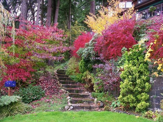Cottage Lake Gardens Bed and Breakfast: The lakeside garden in fall
