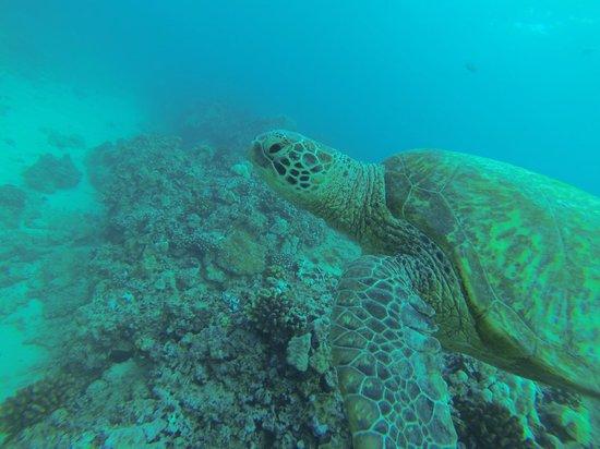 Ocean Legends Dive Center: Carl H