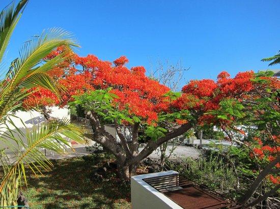 Jean's Home : Дерево перед нашим бунгало