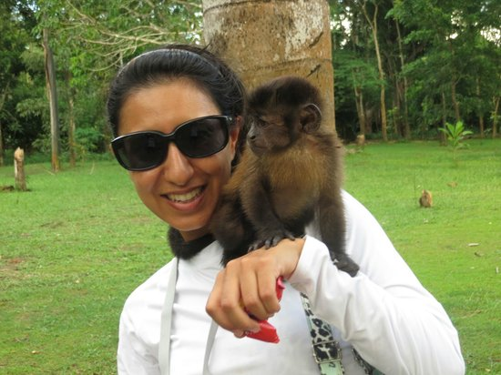 Maniti Expeditions Eco-Lodge: Monkey Island!
