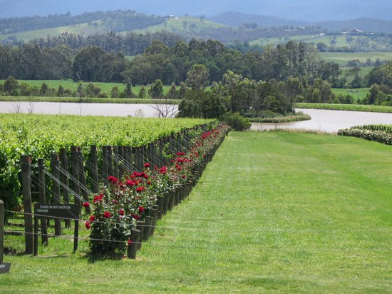 Vinetrekker Wine and Food Tours: Chandon