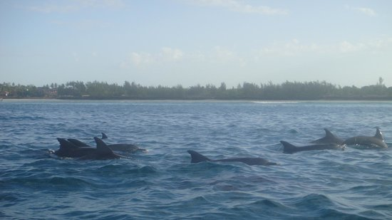 Mamamapambo Boutique Hotel: swimming with the dolphins