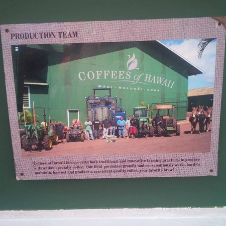 A Touch of Molokai: Coffee Plantation