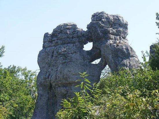 Camping les Actinidias : Ours et lion au bois de Païolive
