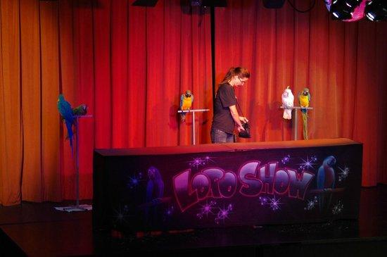 HSM Club Torre Blanca: Show