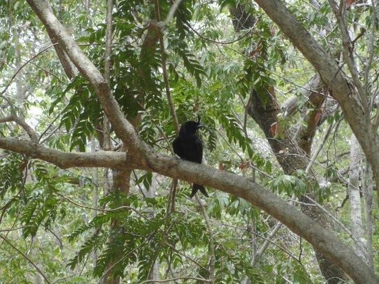 Ankarana Reserve : django