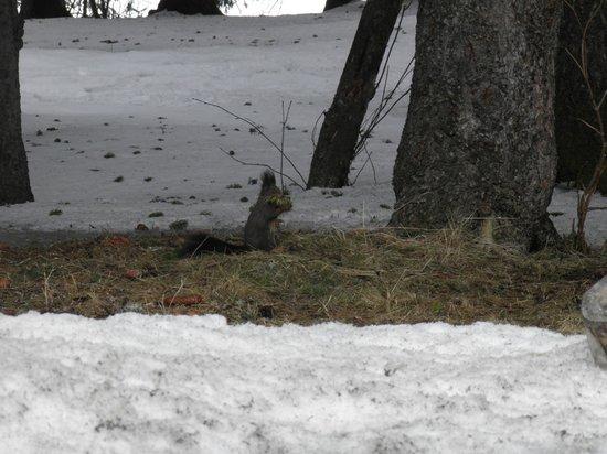 Club Med Saint Moritz Roi Soleil: Pour l' écureuil aussi c'est la pause déjeuner