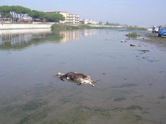 PinetaMare: Müllentsorgung am Strand - Castel Volturno