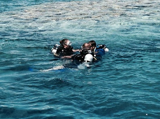 New Dawn Tours - Day Tours : Diving