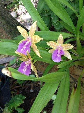 Madalena Apart: flores de Madalena