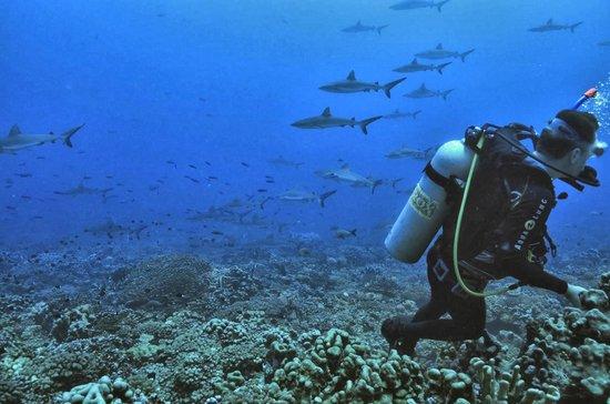 TOPDIVE Fakarava : Fakarava diving & topside attractions