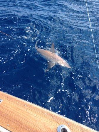 Discretion Sportfishing: Our 200lb bull shark