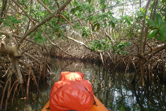 Abe's Snorkeling and BioBay Tours : Mangrove canals in Vieques, PR