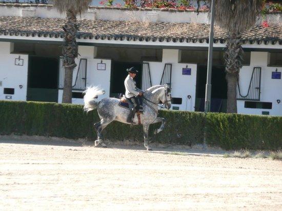 Marriott's Marbella Beach Resort: The Royal Equestrian School in Jerez
