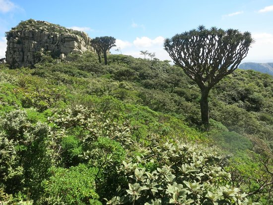 Socotra Island Travel Packages