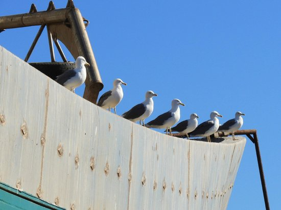 Images in the Sun Tours - Day Tours: Gulls waiting for fish