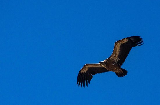 Mi Cortijo: One of the condors we saw from the terrace