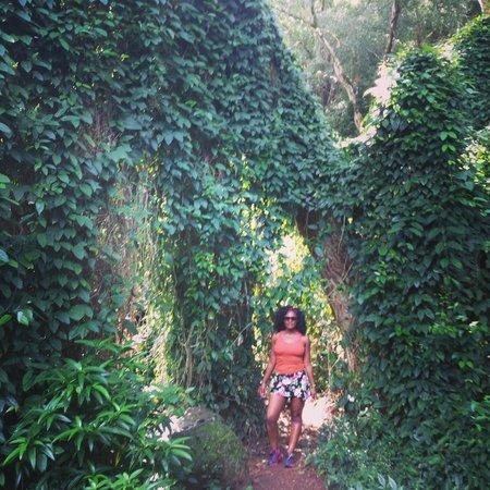Waimea Valley: under the ferns