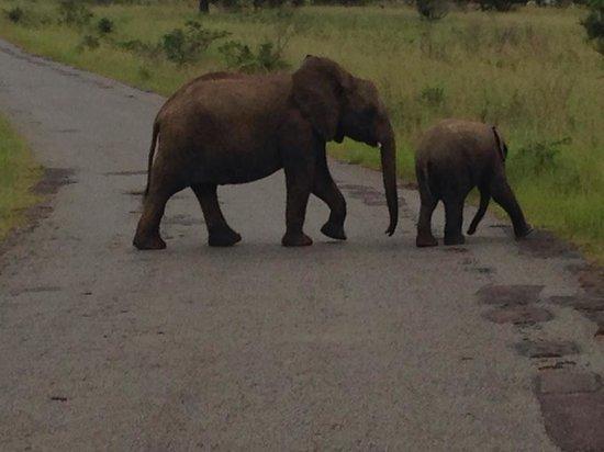 Heritage Day Tours & Safaris: Erephant