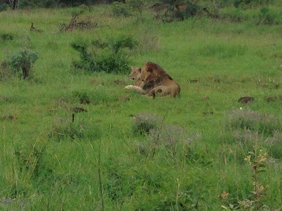 Heritage Day Tours & Safaris: Ryan