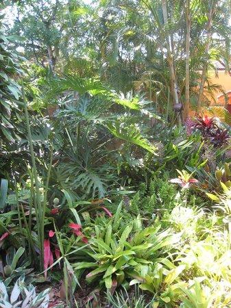 Kwalucia Private Safari Retreat : Garten