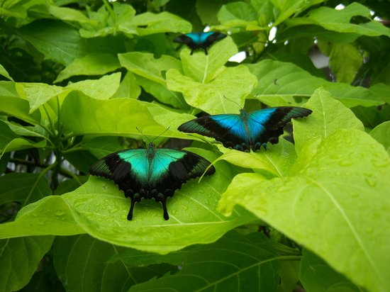 Butterfly Park & Insect Kingdom: Butterflies on leaves