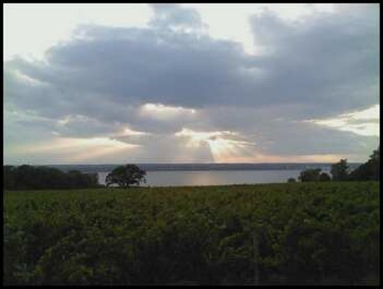 Ventosa Vineyard: Early Summer