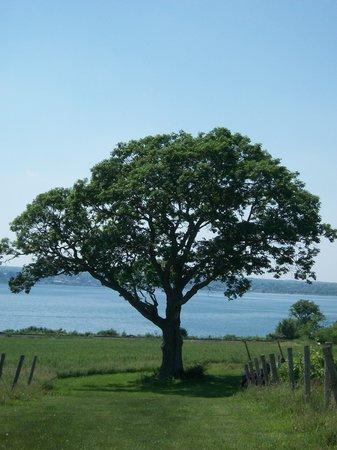 Ventosa Vineyard: Late summer