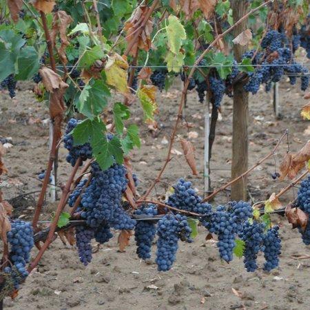 L'Antica Grancia di Quercecchio: From vine to wine, see it all at Quercecchio