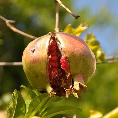 L'Antica Grancia di Quercecchio: Not only vines