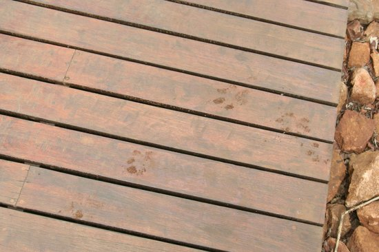 Thanda Safari: Hyänenspuren