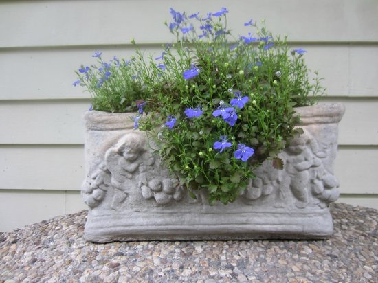 Chimes Bed and Breakfast : Garden flowers