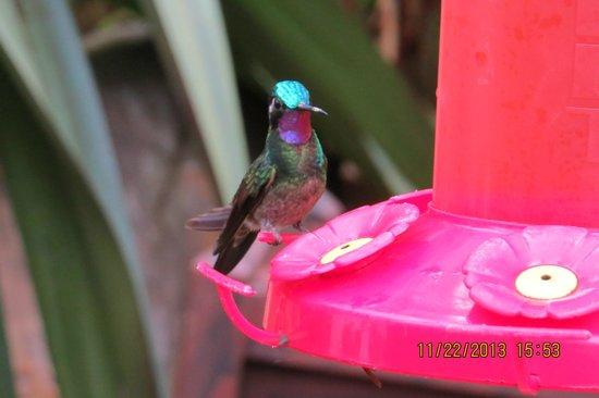 Peace Lodge: La Paz Hummingbird area