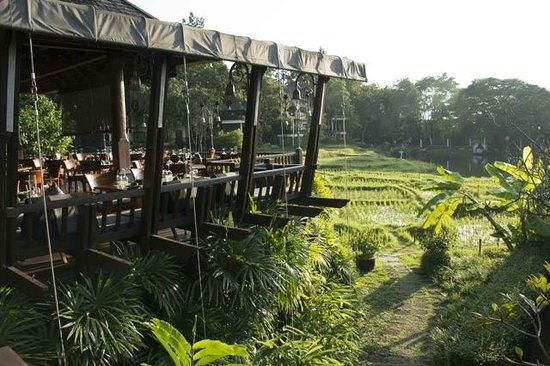 Four Seasons Resort Chiang Mai: Restauranate e arrozal