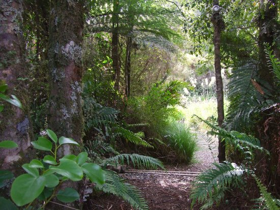 Hurunui Jacks : The path through the bush to the luxury tent.