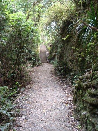 Ruakuri Walk: Walking track 2