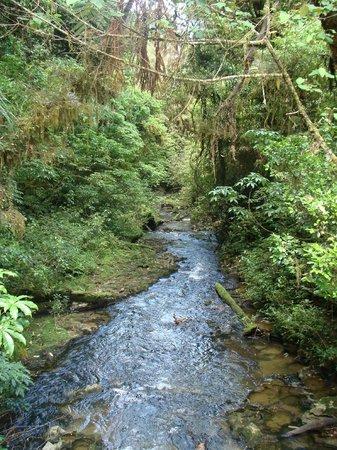 Ruakuri Walk: Tranquil