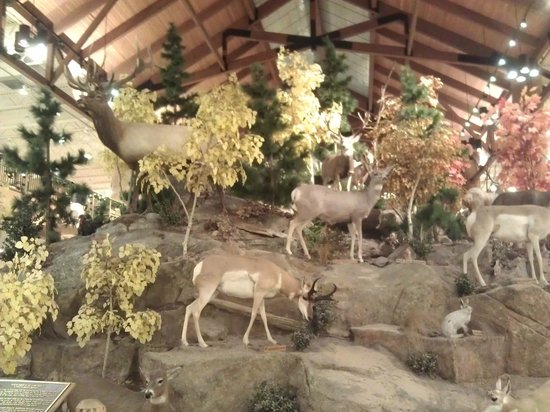 Cabela's the World's Foremost Outfitter East Hartford Connecticut