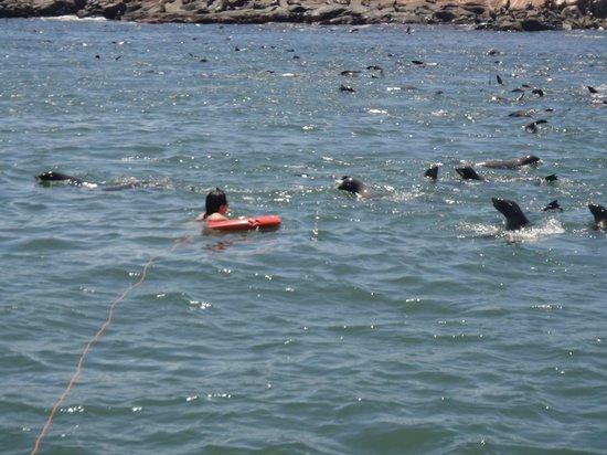 """Mergulho com os lobos marinhos na """"Isla de Lobos""""."""
